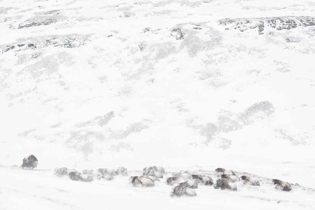 Snowed in #2