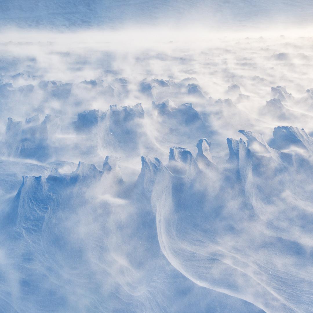 Reindeer tracks in drifting snow
