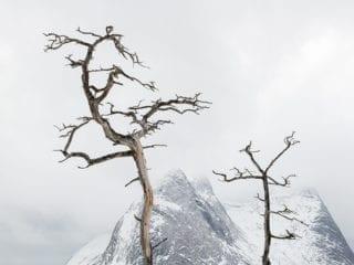 Tree warriors