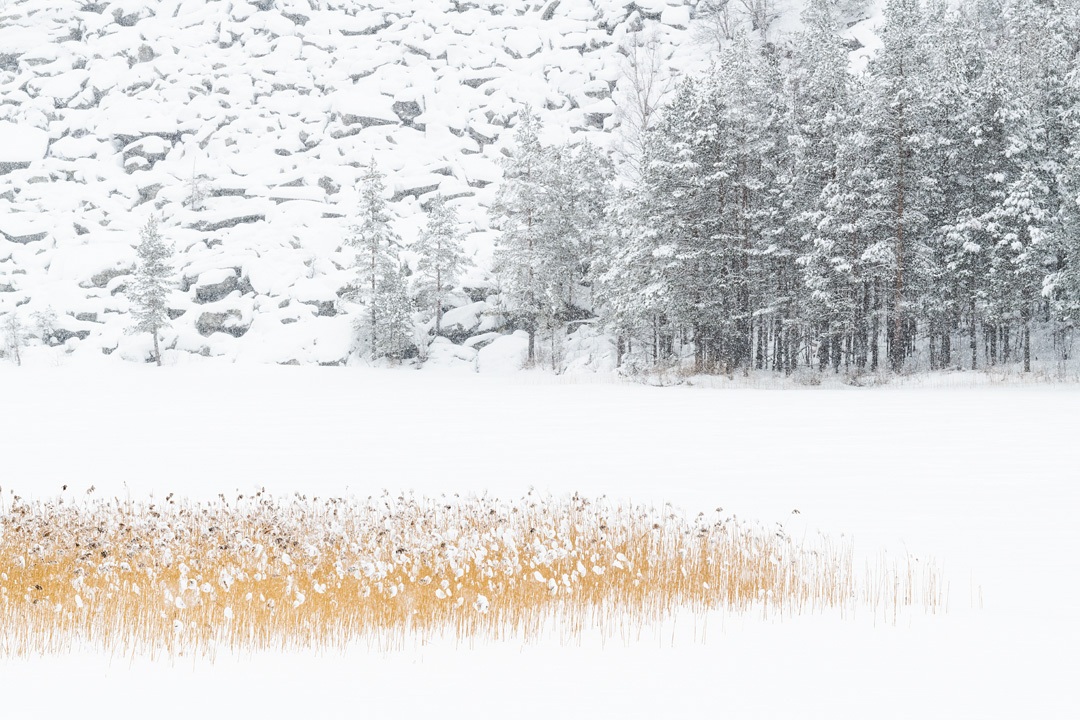 Winter Selsvatnet
