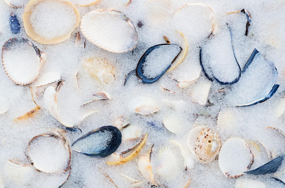 Shells in snow