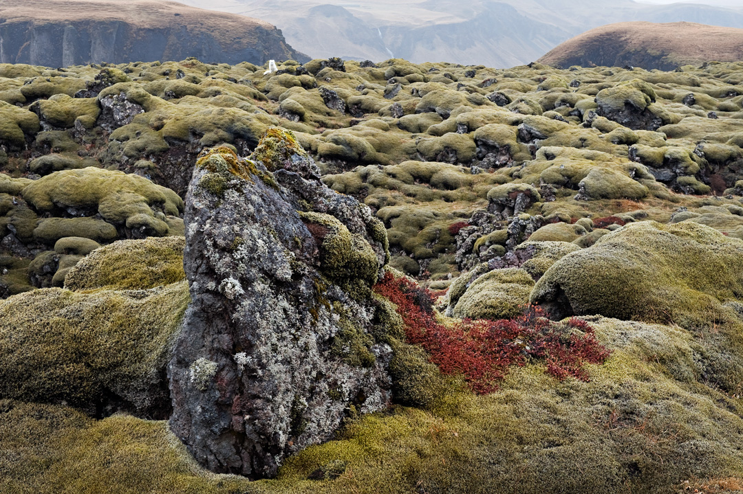 The ghost of the lava field