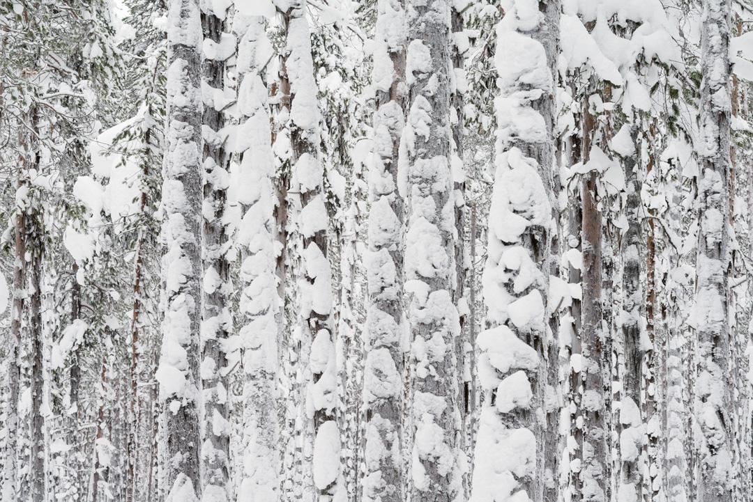 Snow trunks