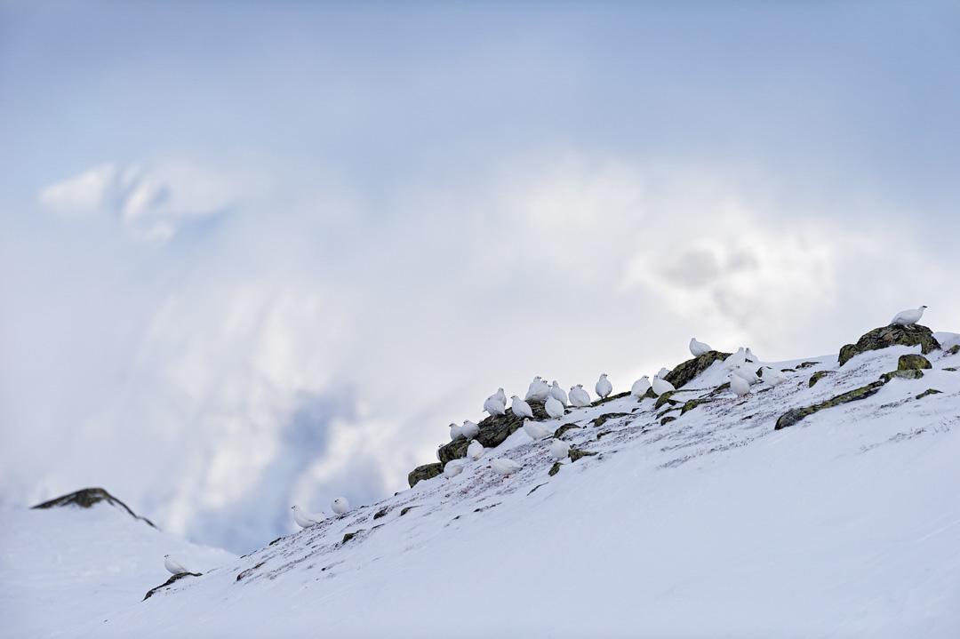 Mountain flock