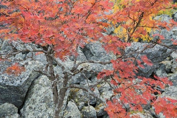 Autumn colours on the rocks