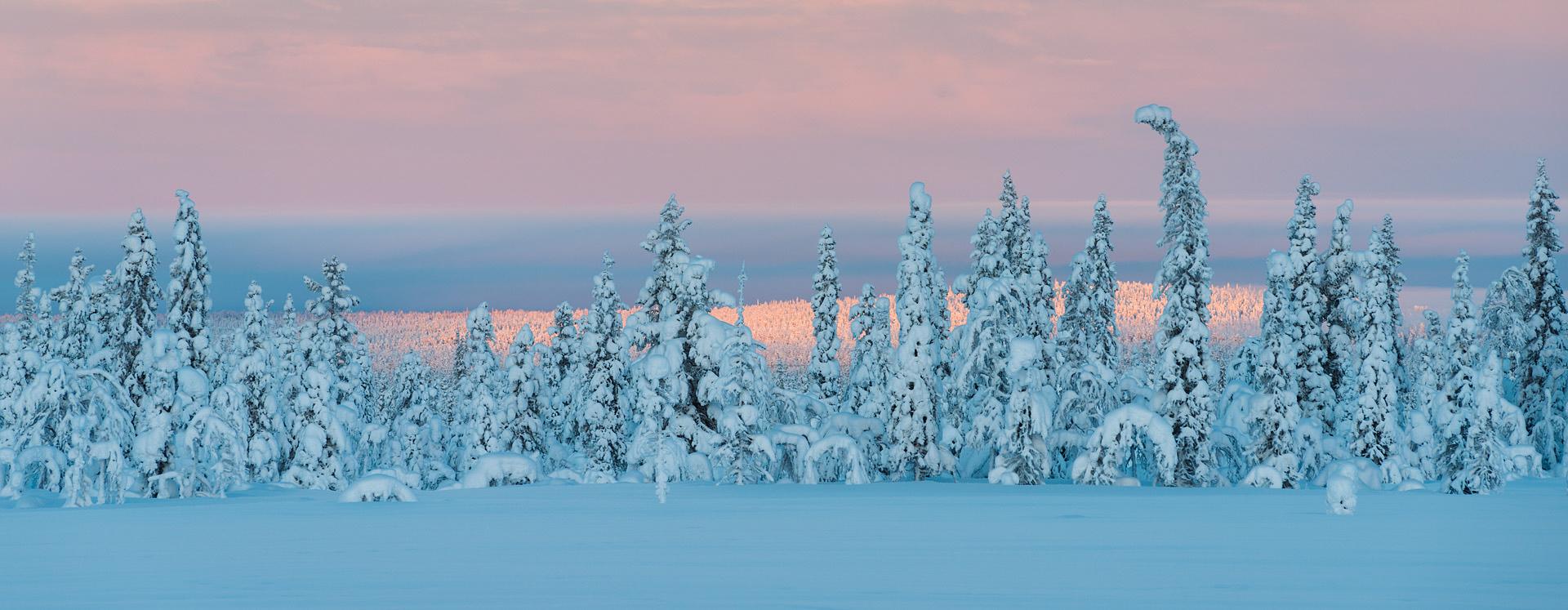 Winter Lapland