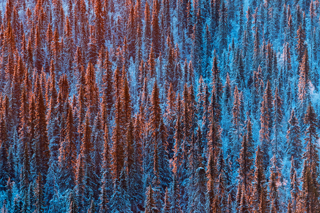 Forest in red and blue